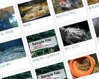 PukiWikiでFacebookなどソーシャルメィア用にOGPを設定する方法